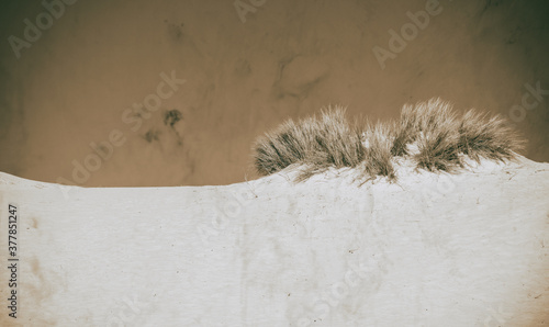 Desert bushes with sand and blue sky Canvas Print