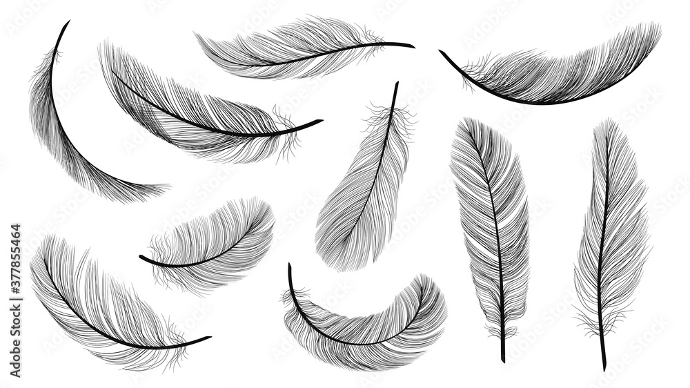 Fotografia Black feathers