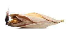 Ripe Corn Cob With Dry Husk, L...