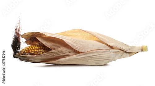 Fotografie, Tablou Ripe corn cob with dry husk, leaf isolated on white background