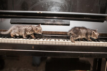 Two Brown Kittens Playful On P...