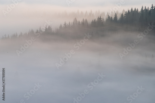 Fotografie, Obraz Autumn landscape of the foggy forest, at sunrise