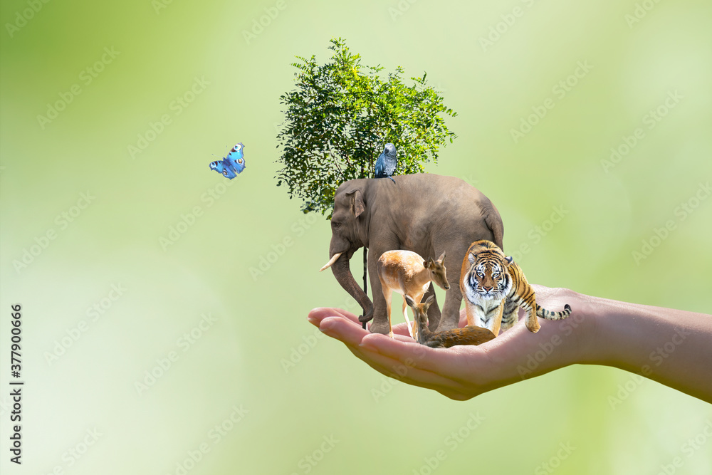Fototapeta World Animal Day or Wildlife Day concept. Elephant, tiger, deer, parrot and green tree in human hand. Saving planet, protect nature reserve, protection of endangered species and biological diversity.