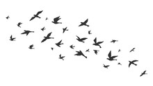 Flying Bird. Free Birds Flock ...