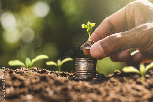 The seedlings are growing on the coins, thinking about financial growth Fotobehang