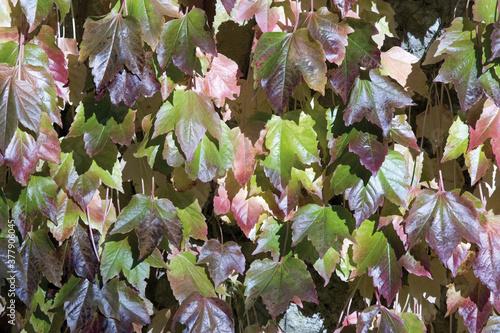 Photo grounds of glastonbury abbey somerset england uk autumn leaves