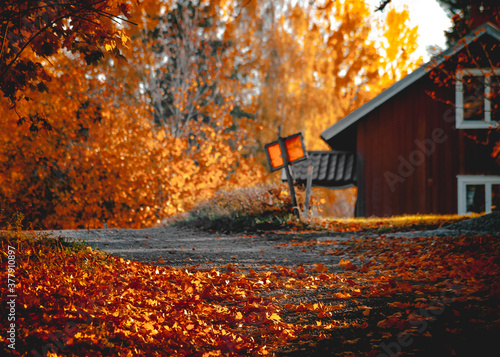 Photo Beautiful autumn in colour in Sweden
