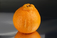Creative Sumo Mandarin Orange (Citrus-reticulata)