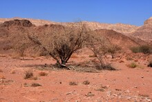 View On The Dry Bush Growing F...