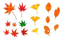 秋に紅葉した楓とイチ...