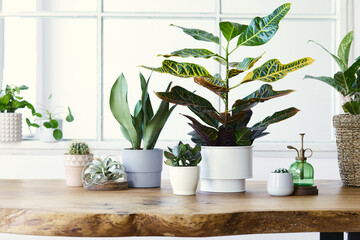 Modern composition of home garden filled a lot of beautiful plants, cacti, succulents, air plant in different design pots. Stylish botany interior. . Home gardening concept. Template.