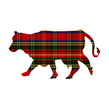 Farm Animal Cow In Tartan Christmas Illustration Clipart. Simple Gingham Checkered Color. Cartoon Cattle With Plaid Pattern Highland Sticker.