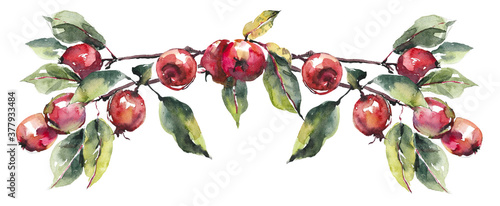 Vignette from red apples. Fall composition. Watercolor hand drawn illustration