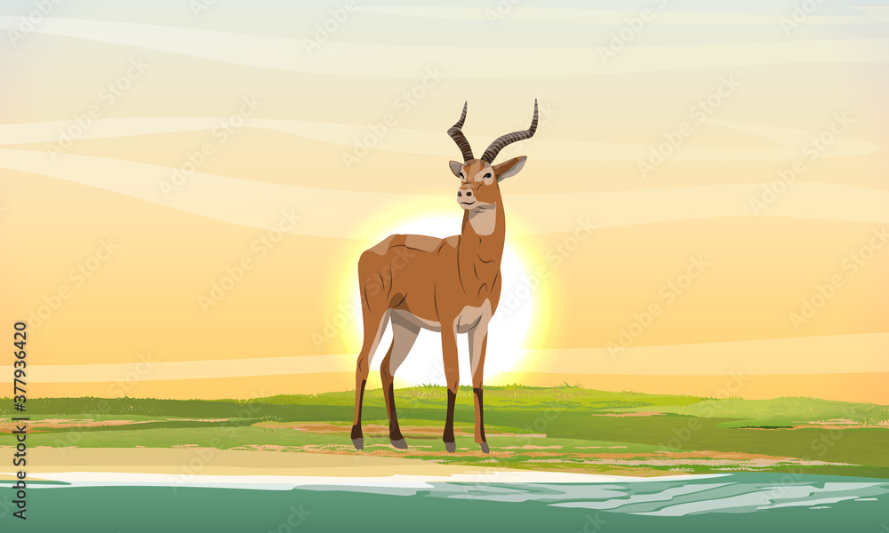 Fototapeta Cob antelope on the shore of the lake at sunset. African savanna with dry grass. Wild animals of Africa. Realistic vector landscape