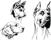 Vector Drawings Sketches Pedig...