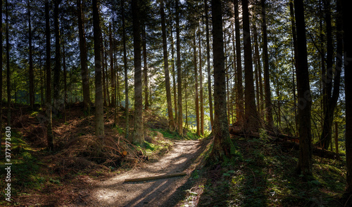 Tela Forest path in good weather with a few rays of sun