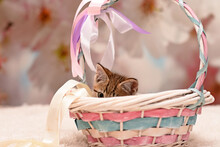 Cute Kitten Peeking Out Of A C...