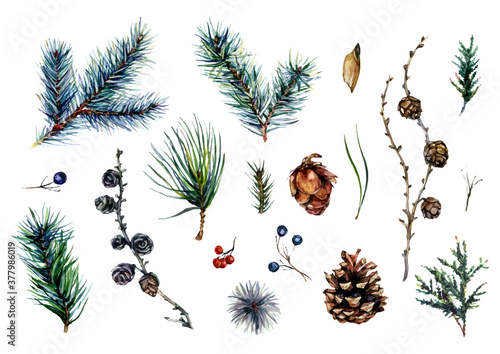 Watercolor Collection of Conifer Branches and Pinecones Fototapet