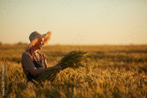 Fototapeta Side view view portrait of smiling woman walking across golden field holding heap of rye and wearing straw hat lit by sunset light, copy space obraz