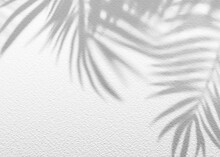 White Gray Grunge Cement Texture Wall Leaf Plant Shadow Background.Summer Tropical Travel Beach With Minimal Concept. Flat Lay Palm Nature.