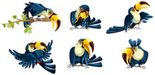 Vector Image Of Toucans In Var...