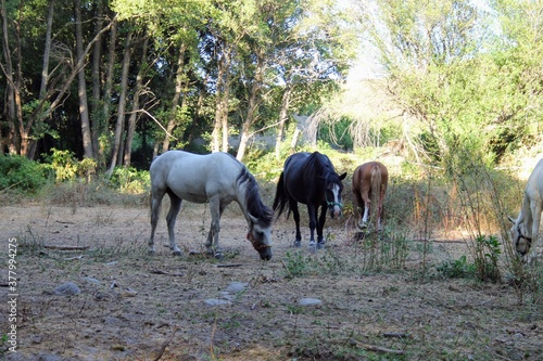 Photo herd of horses