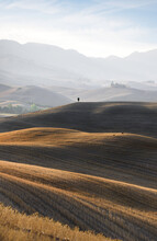 Val D'Orcia - Beautiful Vertical Composition Of Rolling Hills, Lone Cypress And Deer Couple At Sunrise