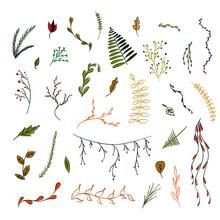 Distintas Plantas Hojas De Col...