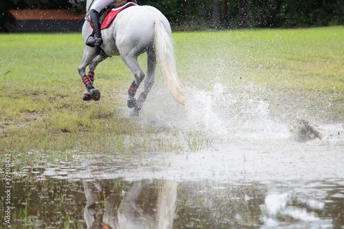 Fotografie, Obraz NC State Wolfpack Equestrian Team Rider thru Water at Carolina Horse Park