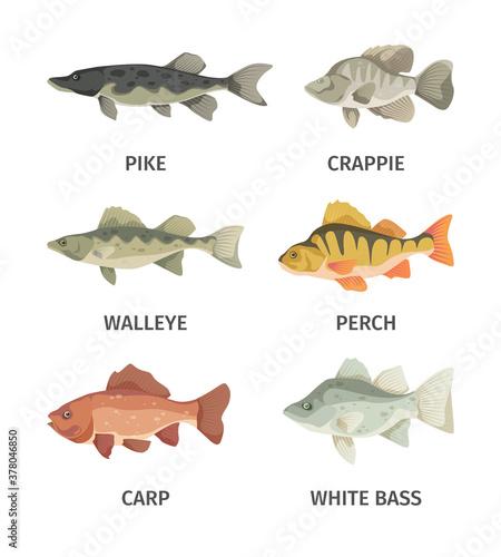 Fototapeta River fish set