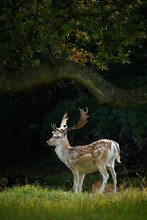 Vertical Shot Of A Deer In A F...