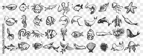 Fototapeta Marine life doodle set