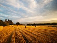 Autumn Late Summer Crop Season...