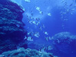 underwater landscape with fishes