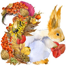 Cute Squirrel. Watercolor Illustration. Forest Animal. Autumn Nature. Colorful Leaves. Wildlife.