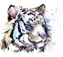 White Tiger. Watercolor Illustration. Nature. Polar Animal. Arctic Wildlife.