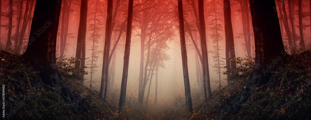 Fototapeta sunset in dark fantasy forest, forest panorama