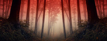 Sunset In Dark Fantasy Forest,...