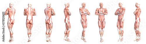 Fotografía Conceptual anatomy healthy skinless human body muscle system set