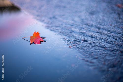 Foto Bright leaf on the wet asphalt after rain