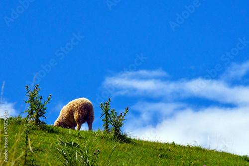 Photo 子羊のおしり