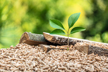 Wood Pellets With Leaf And Tree Trunks.