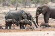 Éléphant d'Afrique, Loxodonta africana, Lion, Parc national Kruger, Afrique du Sud