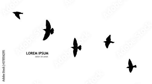 Papel de parede A flock of flying birds. Vector illustration