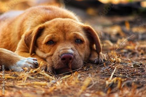 Fotografie, Obraz Puppy giving an innocent pose