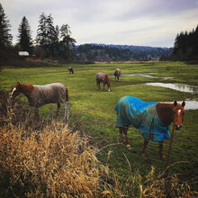 Group Of Horses Wearing Blanke...