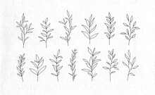 Set Of Vector Tree Branches An...