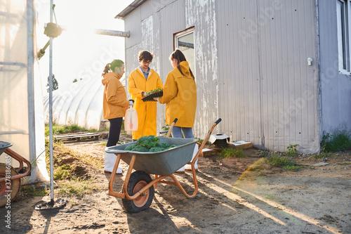 Fototapeta Team of young agronomists working on farm obraz