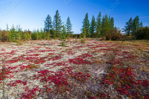 Autumn in the tundra Tableau sur Toile