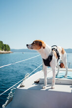 A Dog On A Boat Looking Into T...